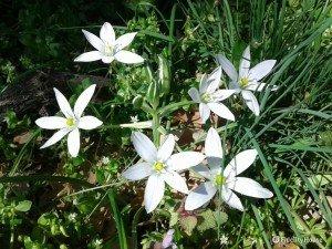 Fiori bianchi in mezzo al prato verde
