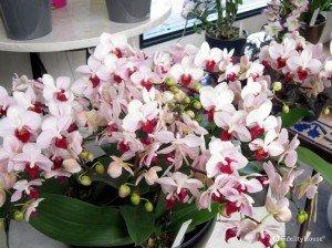 Un mondo di orchidee