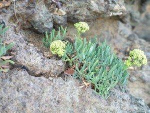 Tipica vegetazione dell'isola d'Elba