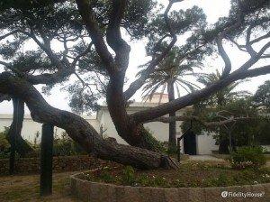 L'albero di Clelia, la figlia di Garibaldi, a Caprera