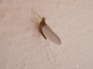 Uno stranissimo insettino