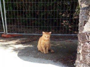 Fulvio, il gatto rosso della Villa Floridiana di Napoli