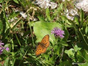 La farfalla di montagna
