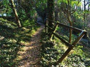 Strada verso la cascata – Limena PD