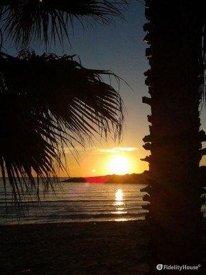 Palme e tramonto sulla spiaggia