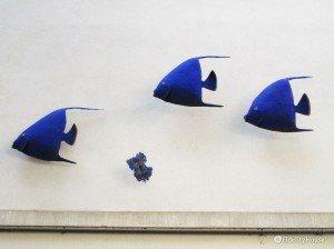 Branco di pesci, di D. Bedulli