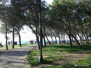 Scorcio della pineta a Barcola, Trieste