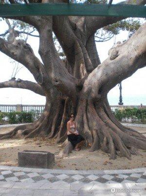 Albero di grandi dimensioni nel Parco Genovese a Cadice