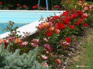 Rose rosse e rosa in piscina