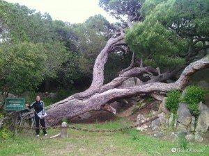 Isola di Caprera in Sardegna