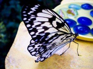 Casa della farfalle a Modica