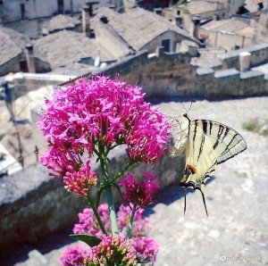 Battito d'ali su un fiore
