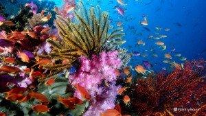 I meravigliosi colori delle barriere coralline